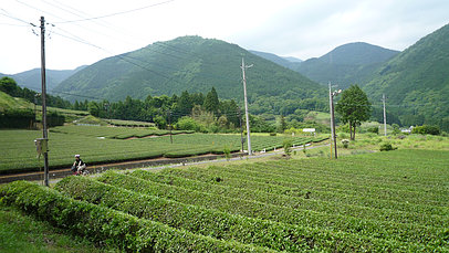 2008_0607_131842aa_s