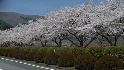 2011_0417_121200aa_s