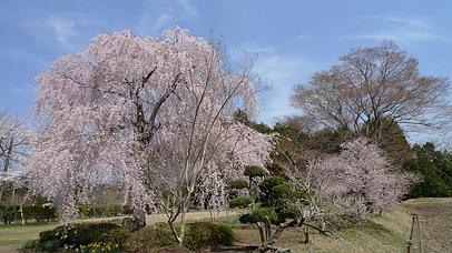 2011_0417_125754aa_s